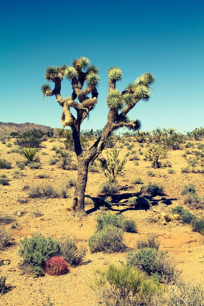 Mojavewüste